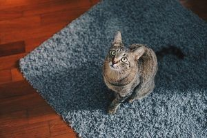 Cat on area rug